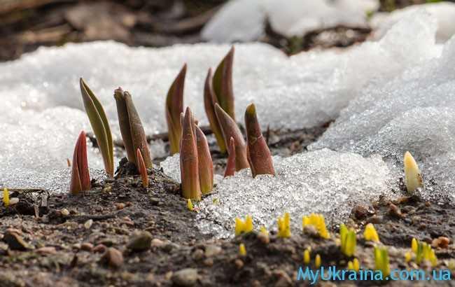 Завершение марта - это яркое пробуждение природы