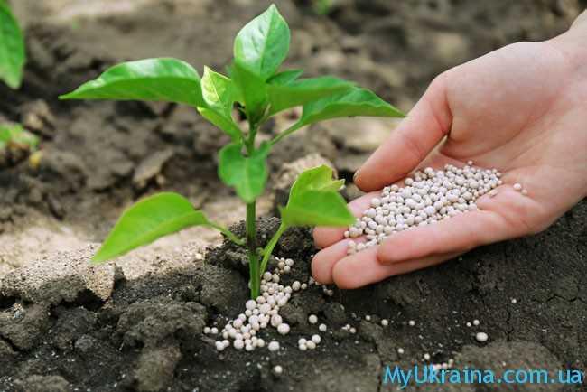 работы по подкормке растений
