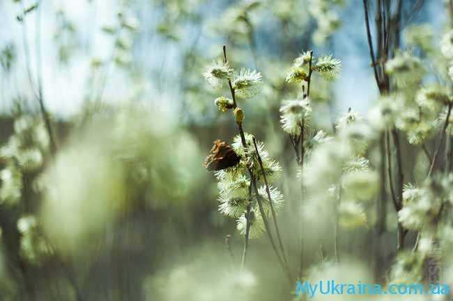 """Апрель - это середина """"зеленой"""" весны"""