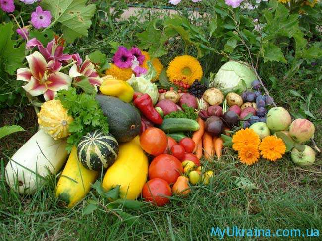 советы для огородников и садоводов