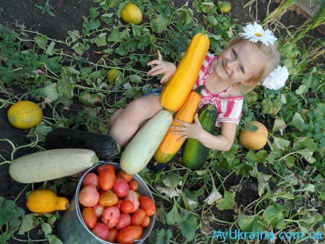 сбор своего урожая