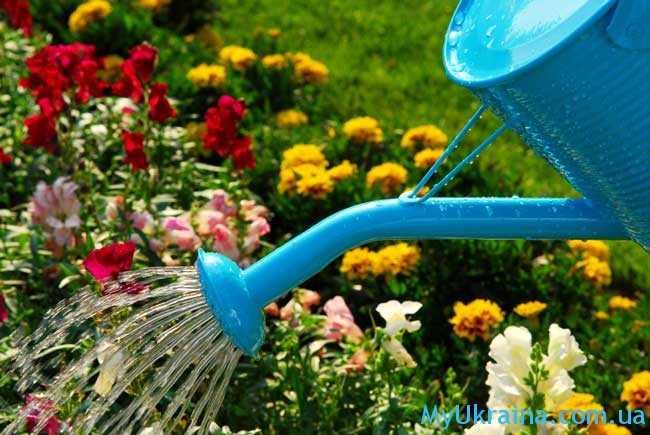 работы в саду и огороде