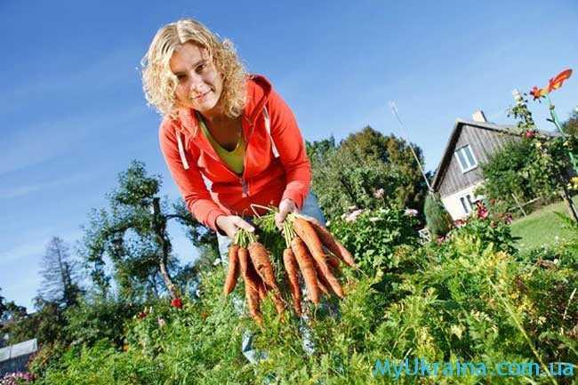 урожай с кустов собран