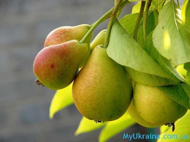полезно провести обработку деревьев и плодовых кустарников