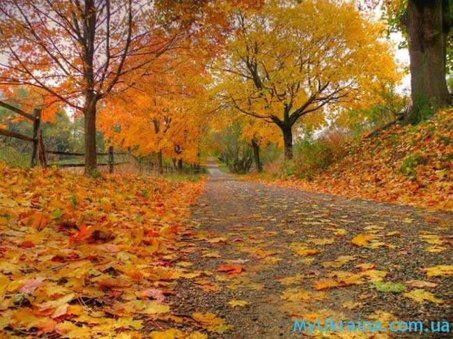Октябрь - это середина осени