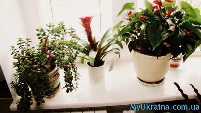 Уход в ноябре за комнатными цветами