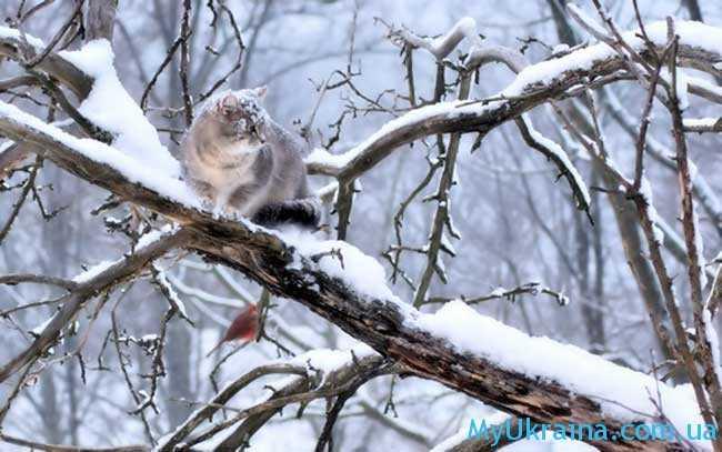 Начало зимы связано с завершением посевного сезона